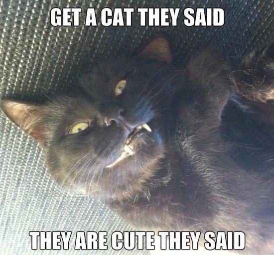 funny-cats-meme
