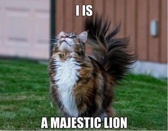 majestic-kitteh-funny-meme-gif