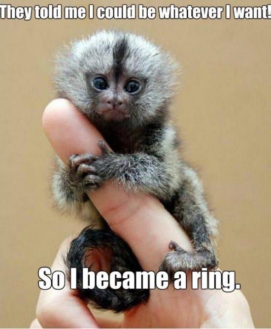 monkey-ring-funny-meme-gif