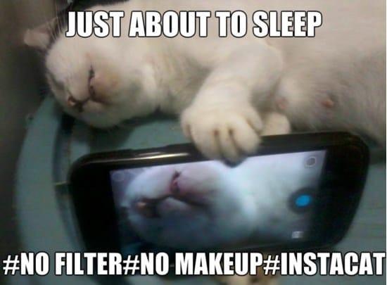 viral-cats-funny-meme-gif