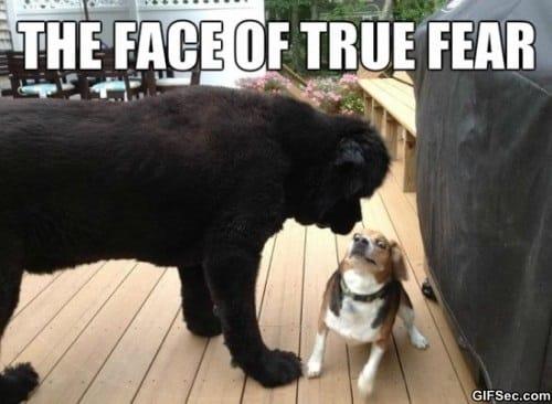 true-fear-meme