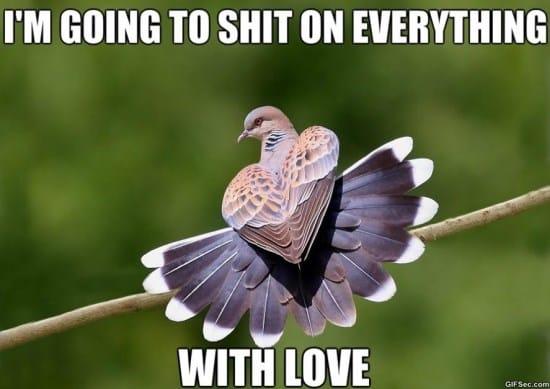 beautiful-pest-meme