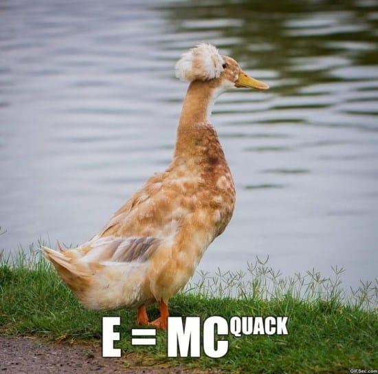 quackstein-meme