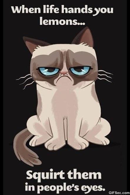 grumpy-cat-is-grumpy-meme