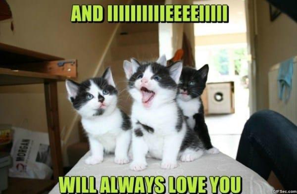 i-will-always-love-you-hooman-meme