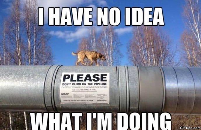 i-have-no-idea-meme