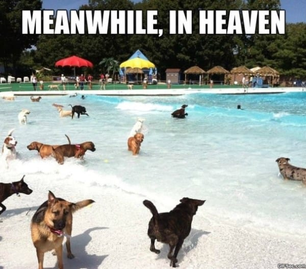 meanwhile-in-heaven-meme