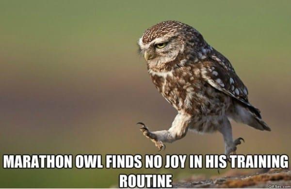 owl-meme