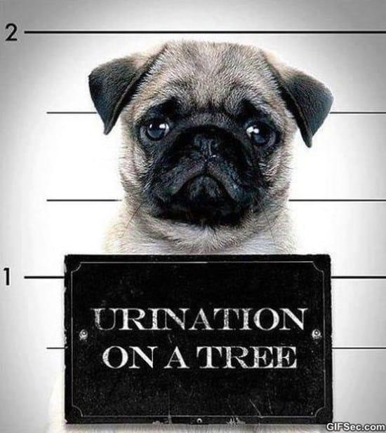 criminal-dog-meme