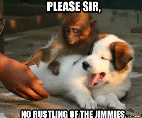 please-sir-meme