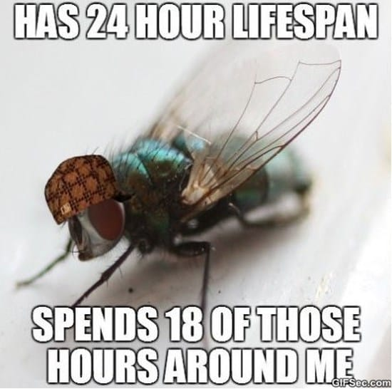 scumbag-fly-meme