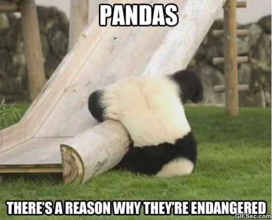 silly-panda-and-meme
