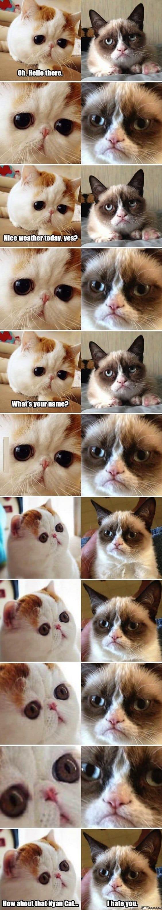 snoopy-cat-meets-grumpy-cat-meme
