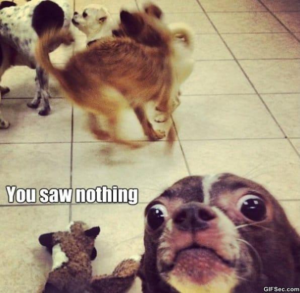 you-saw-nothing-meme