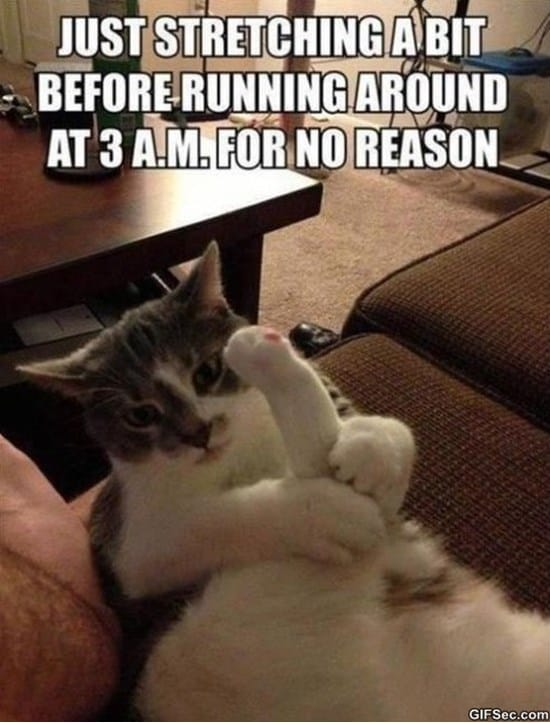 cat-doing-his-nightly-stretches-meme