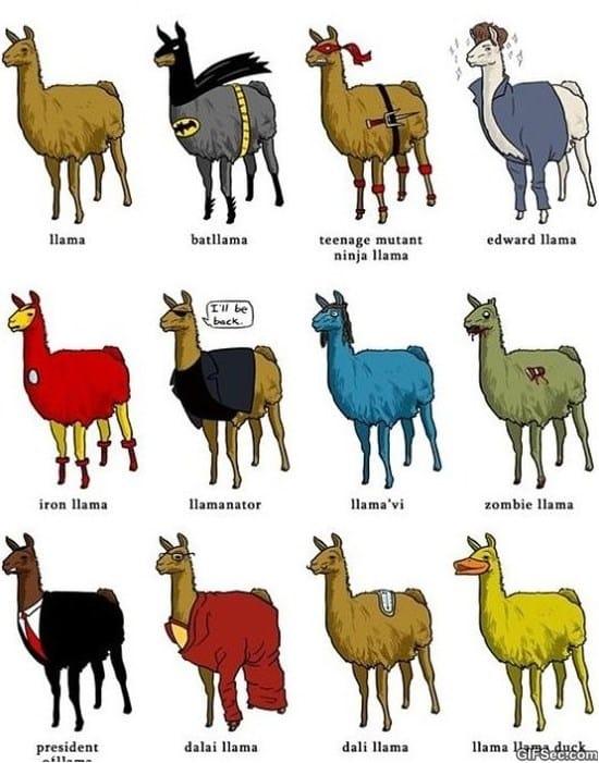 different-types-of-llamas-meme
