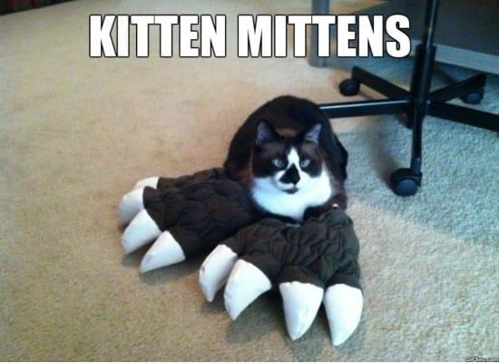 kitten-meme
