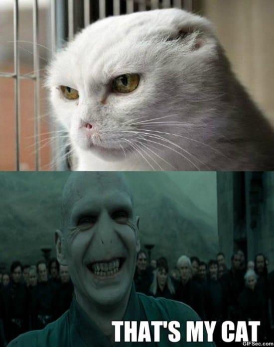 voldemort-cat-meme