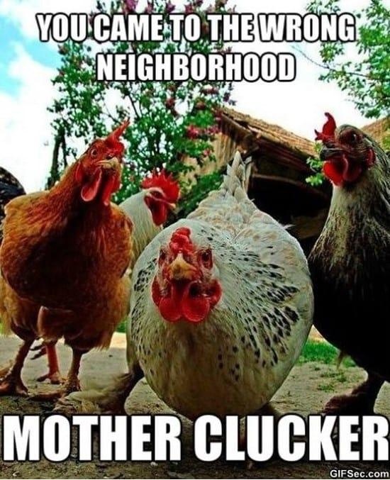 you-came-to-the-wrong-neighborhood-meme