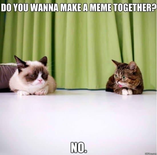 lil-bub-and-grumpy-cat-meme