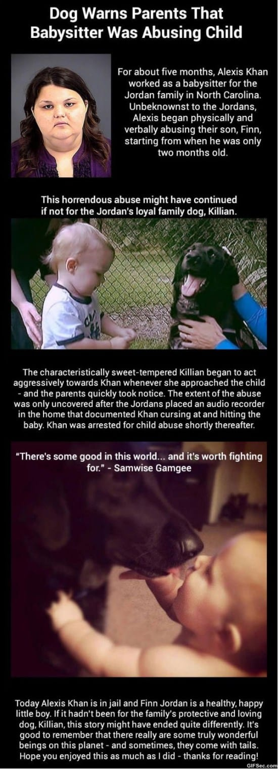dog-warns-parents-babysitter-was-abusing-child-meme-2015
