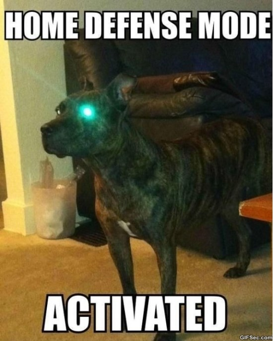 Funny Memes 2015 About Work : Activated meme