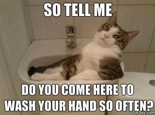 cat-acting-smooth-meme-2015