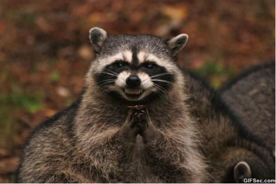 evil-plotting-raccoon-meme-2015