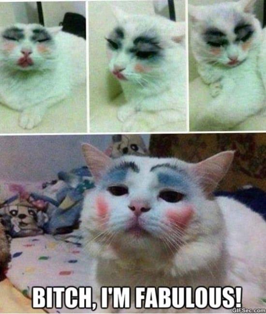 fabulous-cat-meme-2015