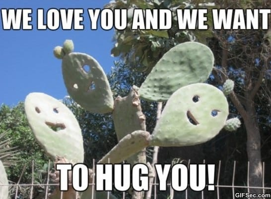 Love You More Funny Meme : Friendly cactus meme