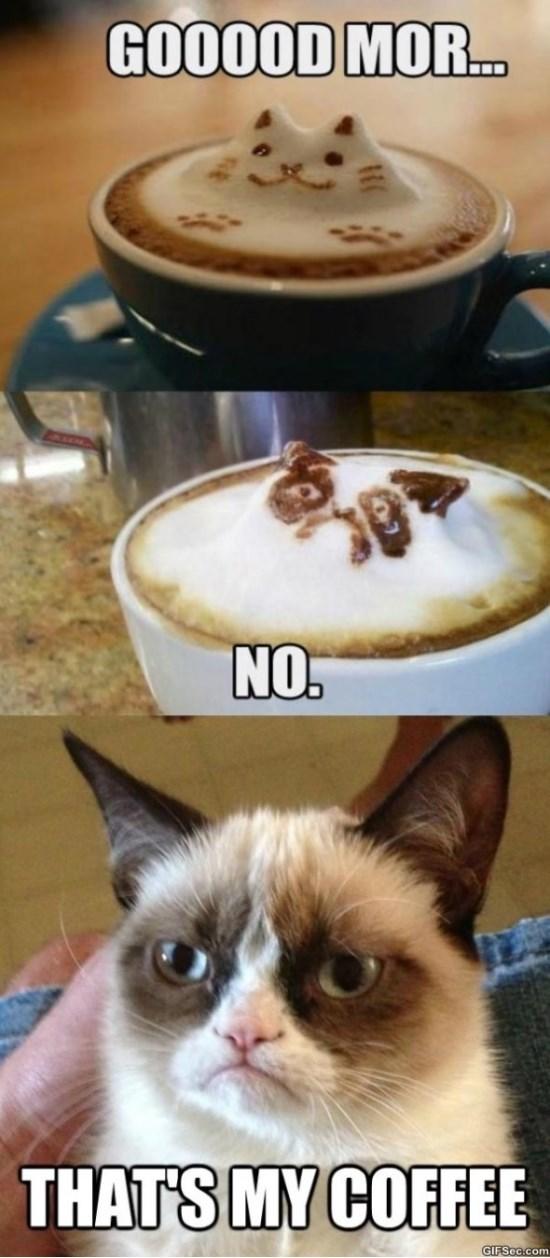 grumpy-cat-approves-meme-2015