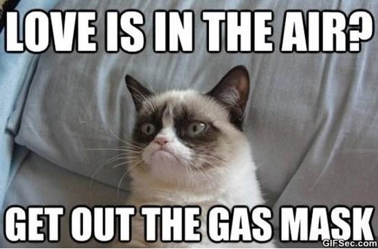 grumpy-cat-haha-meme-2015