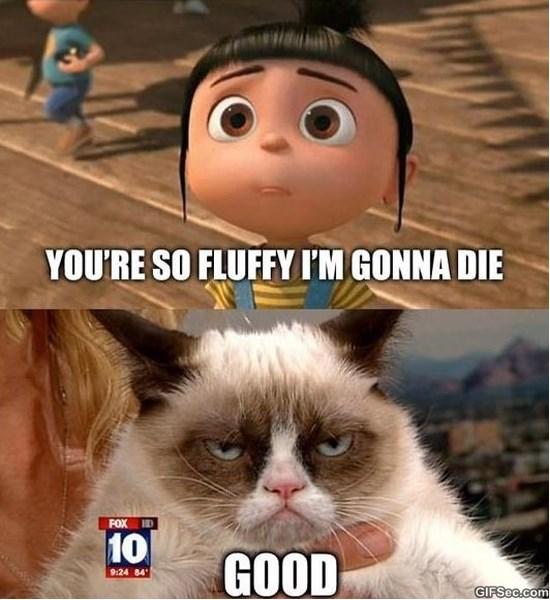 grumpy-cat-and-lol-meme-2015