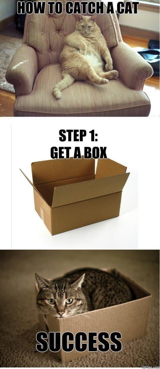 how-to-catch-a-cat-meme-2015