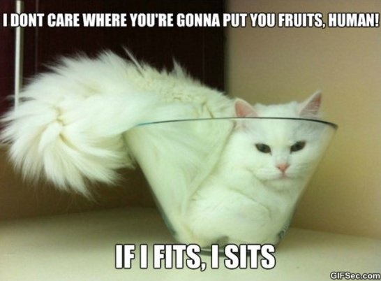 if-i-fits-i-sits-meme-2015