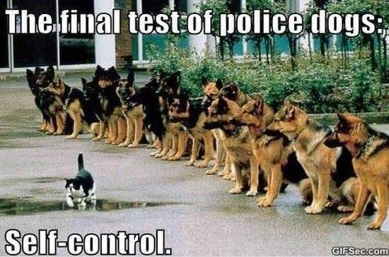 police-dogs-meme-2015