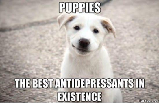 puppies-meme-2015