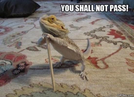 you-shall-not-pass-meme-2015