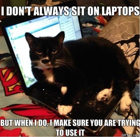 cat-logic-meme