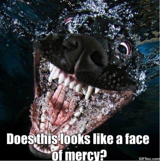 face-of-mercy-meme