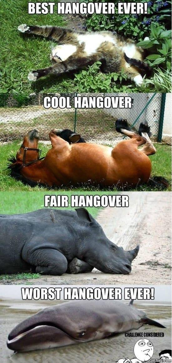 hangover-meme