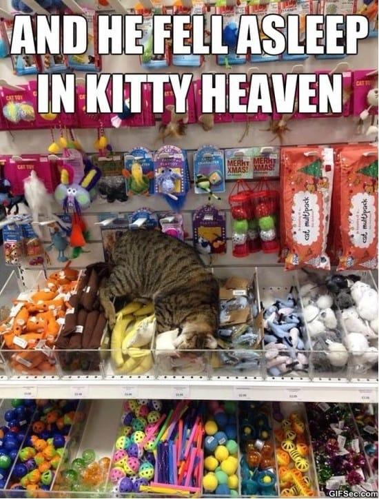 heaven-meme