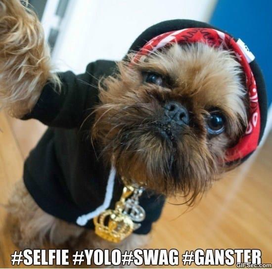 selfie-meme
