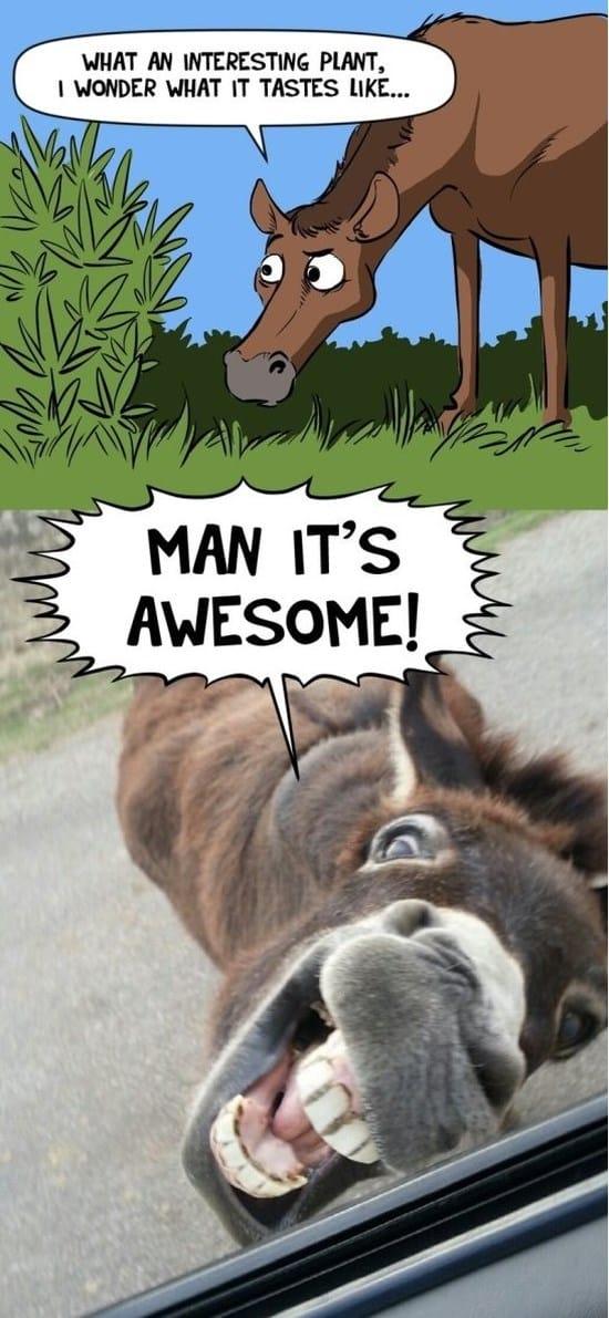 donkey-business