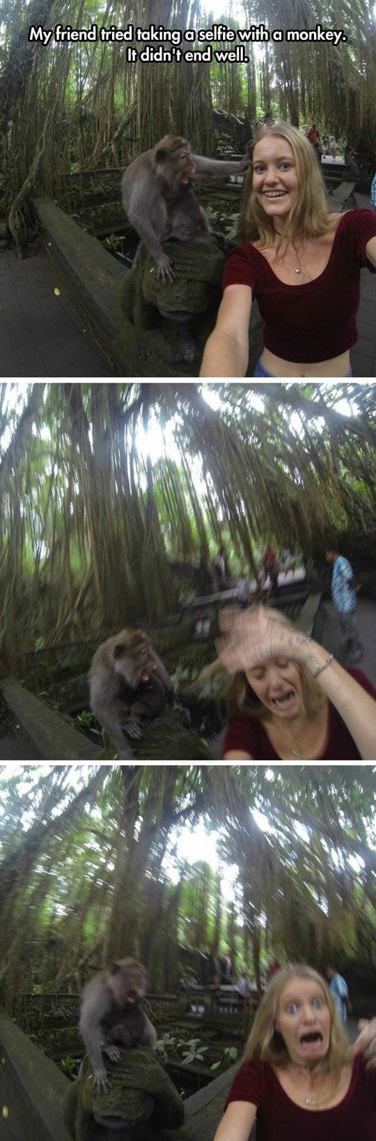 selfie-with-a-monkey