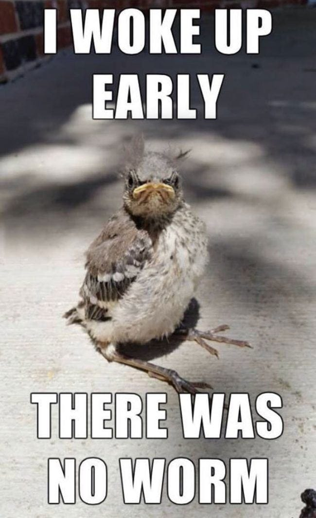the-early-bird