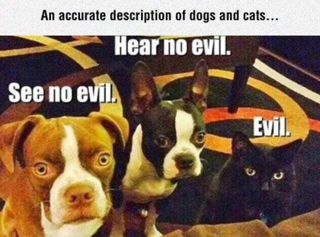 accurate-description-of-dogs-and-cats