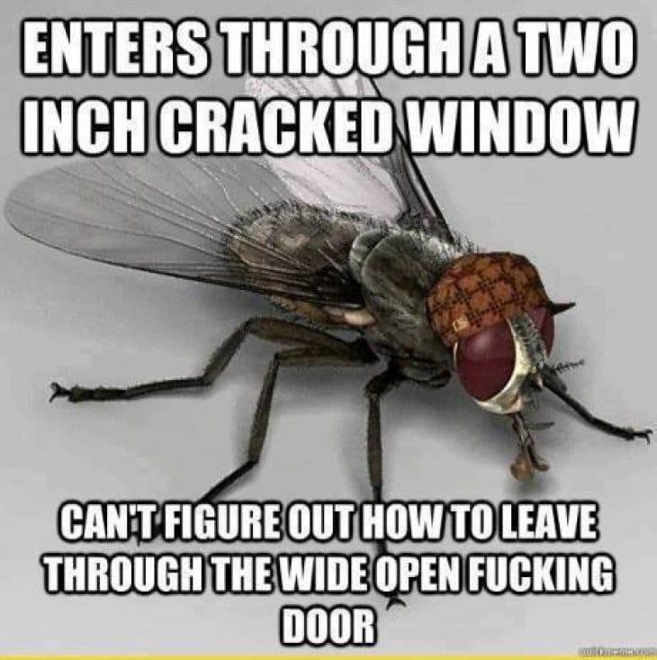 stupid-fly