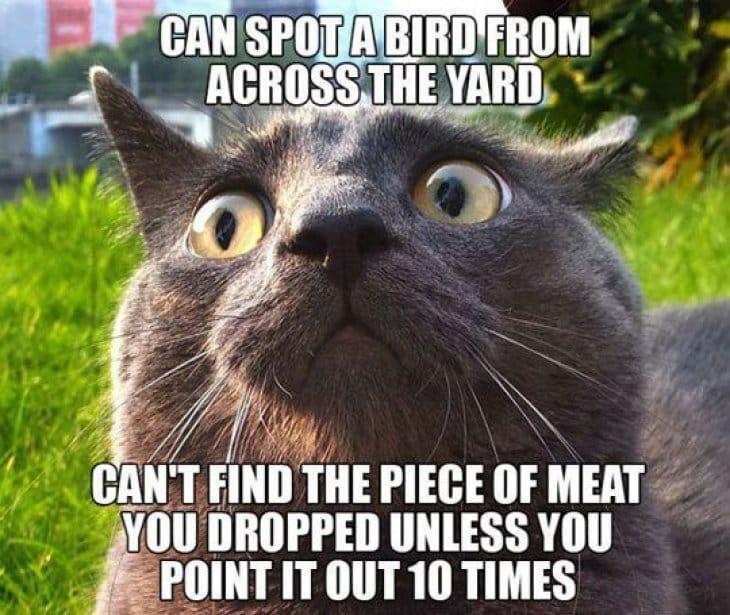 can-spot-a-bird-from-across-a-yard
