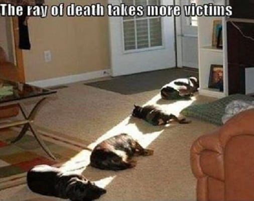 dogs-in-the-sun